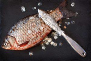 Best fish scaler 2020