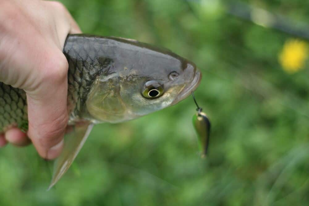how to use a spoon lure