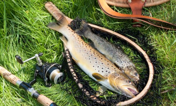 Freshwater Trout Fishing with a Split Shot Rig
