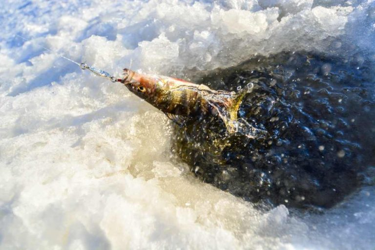 ice fishing tips for perch