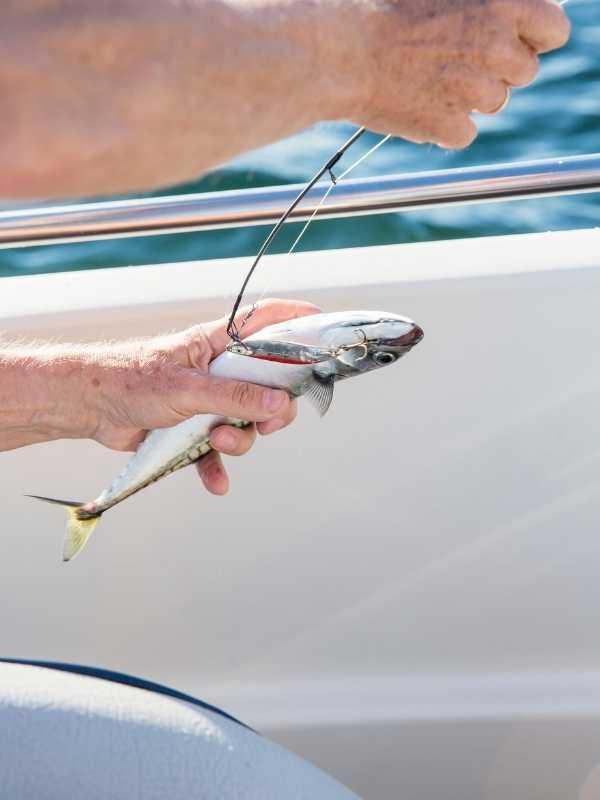 live bait for deep sea fishing